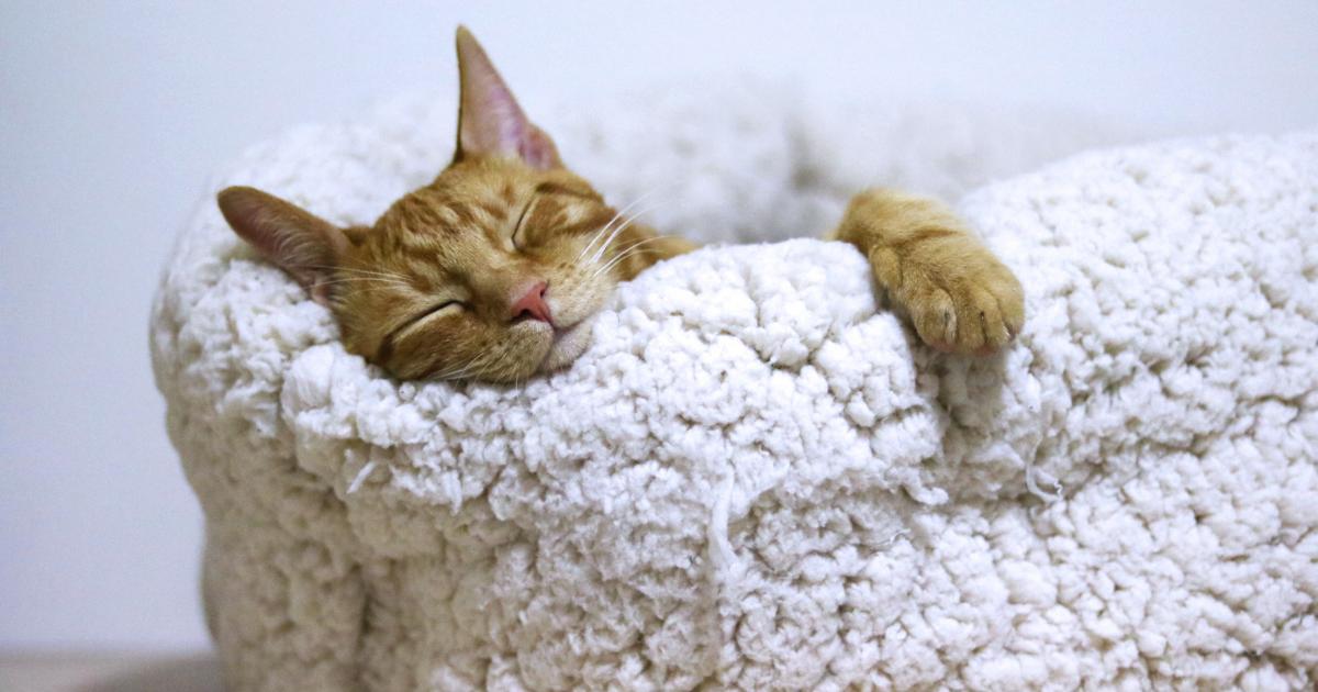 自由に使える時間を増やす方法②しっかりと睡眠をとって定時で帰宅する